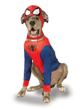 Big Dog Spider-Man Costume