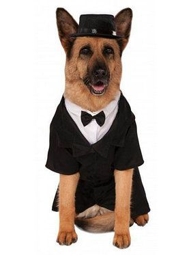 Big Dogs' Dapper Dog Pet Costume