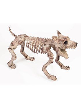 Bone Skeleton Dog Prop