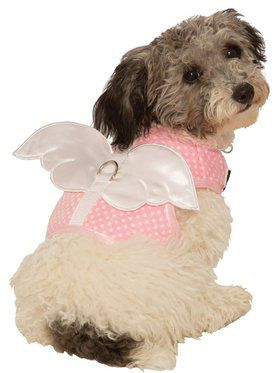 Pet Angel Costume Ideas