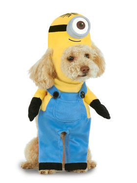 Minion Stuart Pet Costume