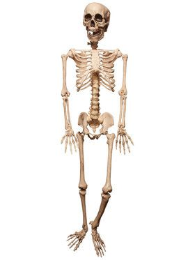 Pose And Hold Lifesize Skeleton Prop