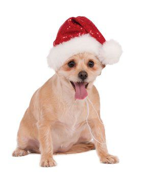 Red Sequin Santa Hat for Pets