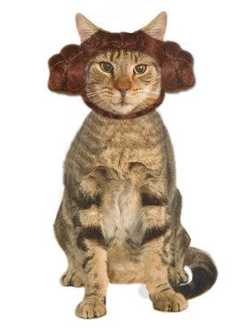 Pet Cat Leia Buns
