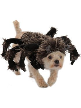 Tarantula Dog Costume