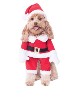 Santa Pet Walking Costume